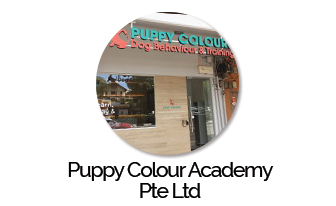 Puppy Colour Academy Pte Ltd