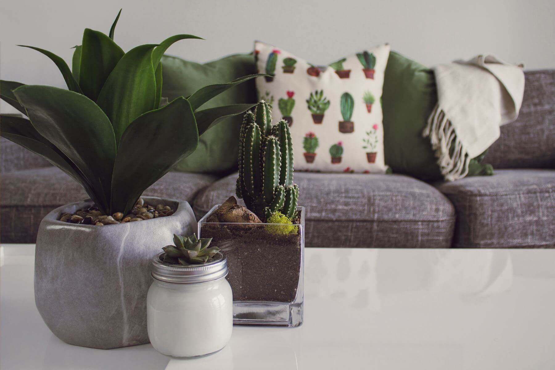 Why You Should Get Indoor Plants For Your Home and Workplace