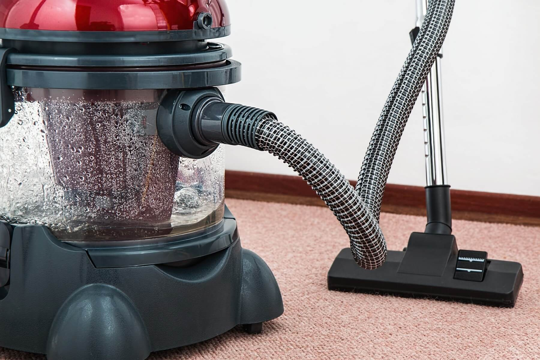 Vacuum your carpet daily